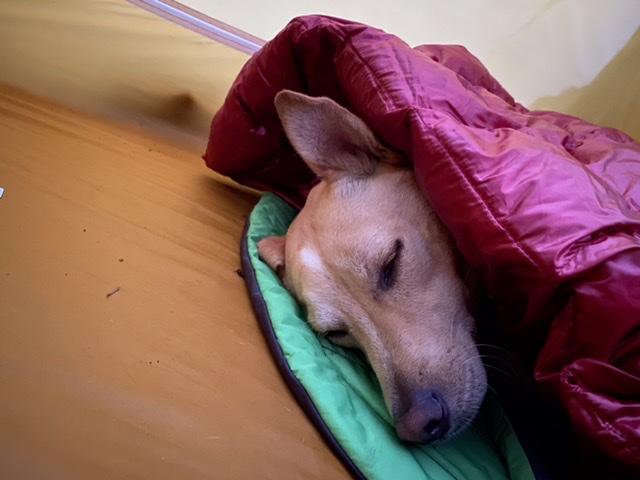 Hunter tucked up