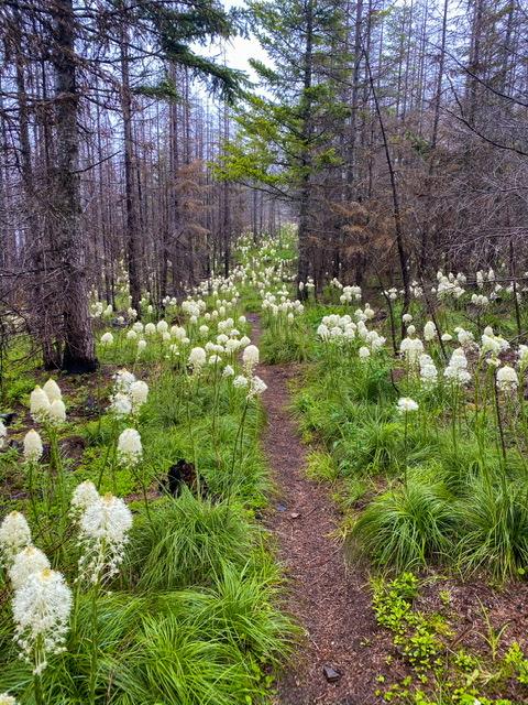 Trail through burn area
