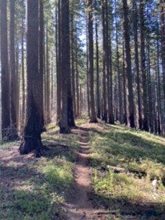 Burn Area on Mount Defiance Trail