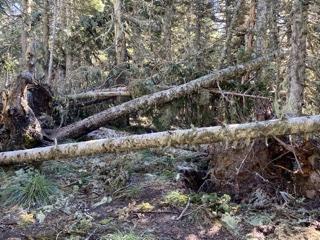 Top Spur to Mazama Trail – devastation after 100m/h winds