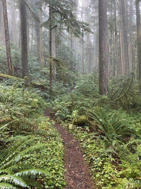 Green Canyon Way Trail