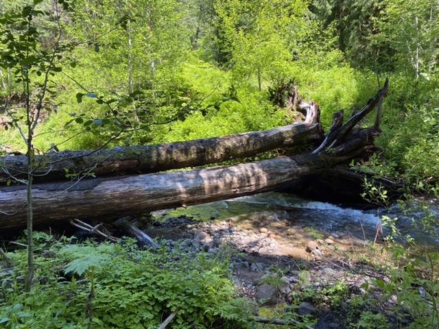 Log crossing of the Muddy River
