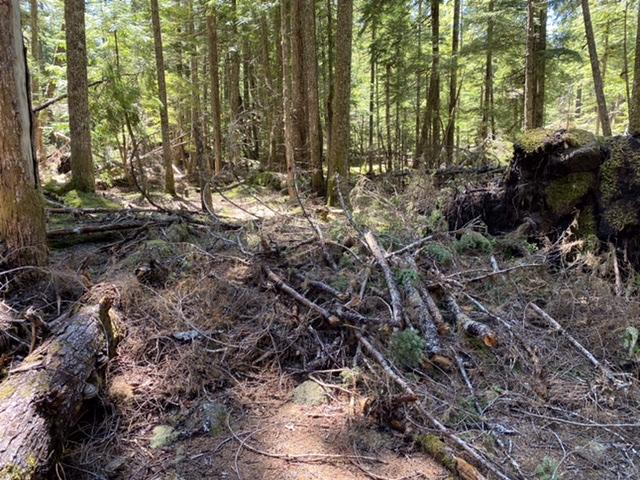 Debris across camping spot