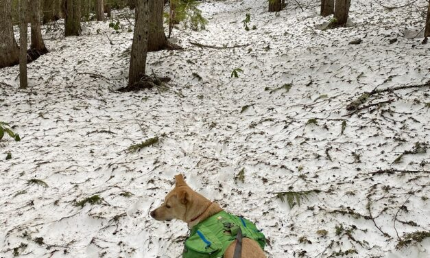 Paradise Park Trail – always awesome, but still snow!